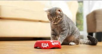 Почему кошка не ест ?